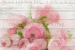 Roses in Paris by Kimberly Allen
