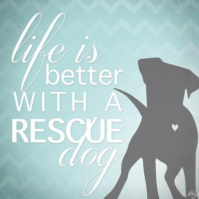 Better with a Rescue Dog