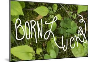 Born Lucky by Kimberly Glover