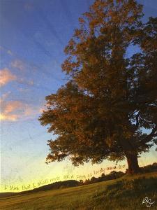 Tree Poem by Kimberly Glover
