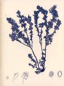 Blue Botanical Study III by Kimberly Poloson