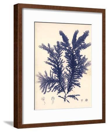 Blue Botanical Study IV