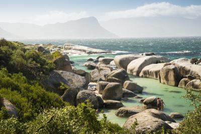 Second Beach at High Tide with Boulders Visible, Boulders Beach National Park, Simonstown