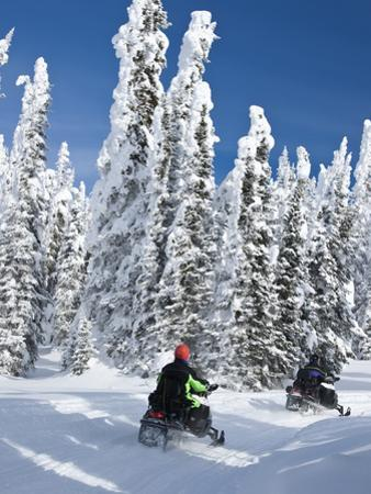 Snowmobilers Riding Through a Forest of Hoar Frosted Trees on Two Top Mountain, West Yellowstone, M