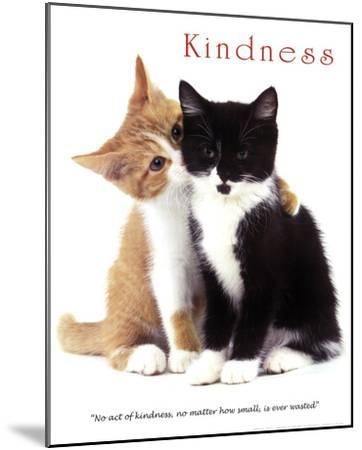 Kindness Two Cute Kittens