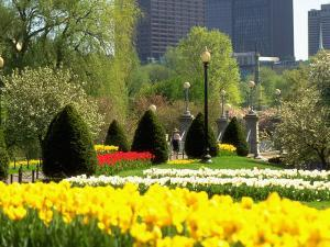 Public Gardens, Boston, MA by Kindra Clineff
