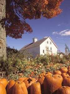Pumpkins for Sale in Concord, MA by Kindra Clineff