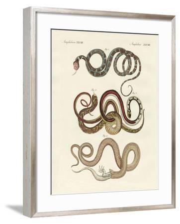 Kinds of Colubrids--Framed Giclee Print