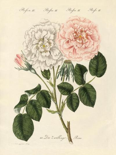 Kinds of Roses--Giclee Print