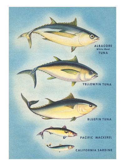 Kinds of Tuna Fish--Art Print