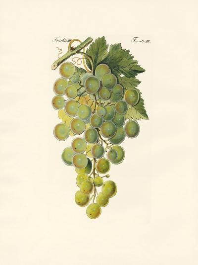 Kinds of Vines--Giclee Print