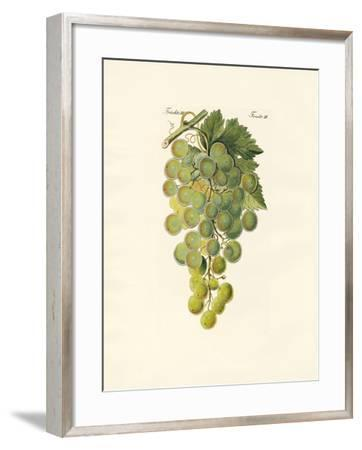 Kinds of Vines--Framed Giclee Print
