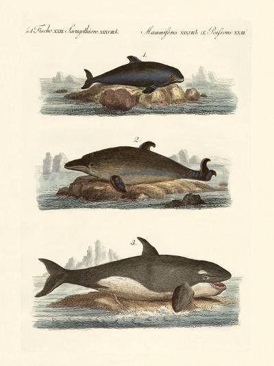 Kinds of Whales--Giclee Print