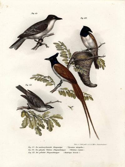 King Bird, 1864--Giclee Print