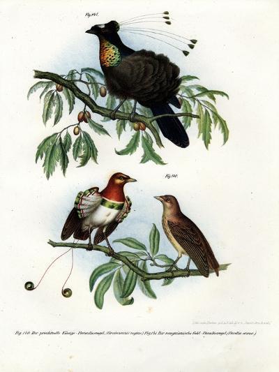 King Bird of Paradise, 1864--Giclee Print
