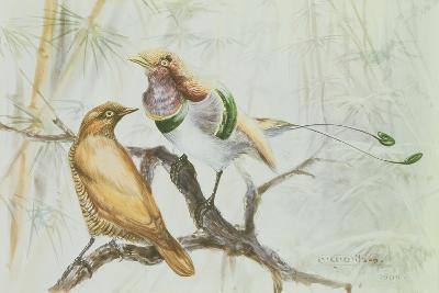 King Bird of Paradise, 1909-Edward Adrian Wilson-Giclee Print