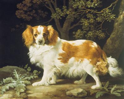 King Charles Spaniel-George Stubbs-Giclee Print