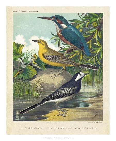 King-fisher & Wagtails-Cassell-Giclee Print