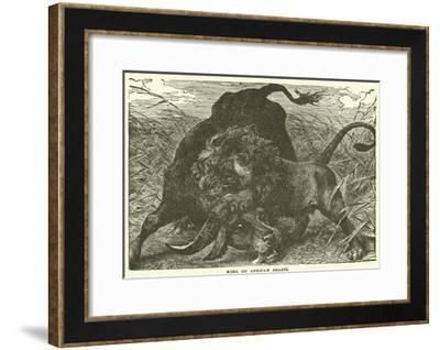 King of African Beasts--Framed Giclee Print