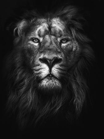 https://imgc.artprintimages.com/img/print/king-of-kings_u-l-q1g62lk0.jpg?p=0