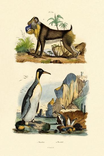 King Penguin, 1833-39--Giclee Print