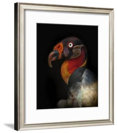 King Vulture-Sarcoramphus Papa-Ferdinando Valverde-Framed Giclee Print