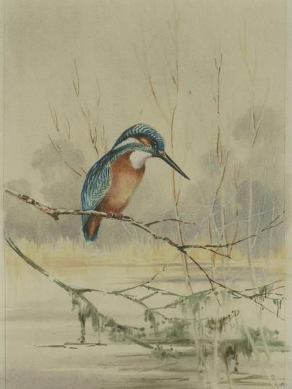 Kingfisher, Illustration from 'A History of British Birds' by William Yarrell, c.1905-10-Edward Adrian Wilson-Giclee Print