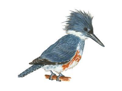Kingfisher (Megaceryle Alcyon), Birds-Encyclopaedia Britannica-Art Print