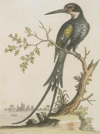 Kingfisher--Giclee Print