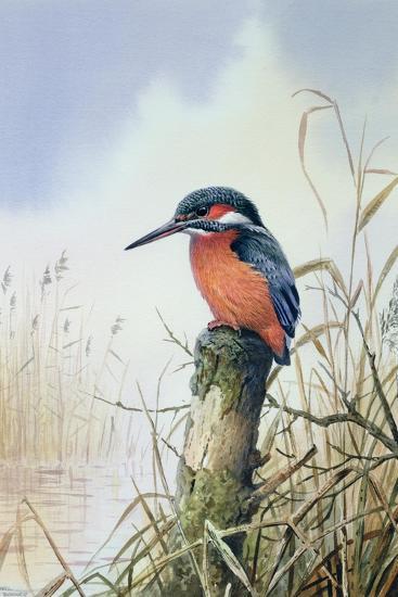 Kingfisher-Carl Donner-Giclee Print