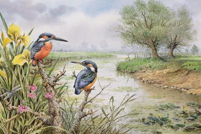 Kingfishers on the Riverbank-Carl Donner-Giclee Print