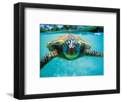Honu, Hawaiian Sea Turtle by Kirk Lee Aeder