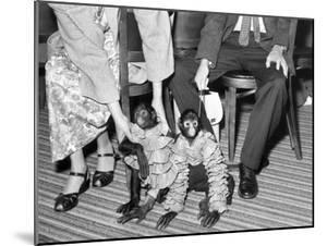 Pet Monkeys All Dressed Up, Ca. 1961. by Kirn Vintage Stock