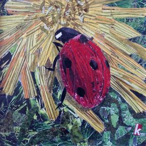 Rise' Ladybird on Chrysanthemum by Kirstie Adamson