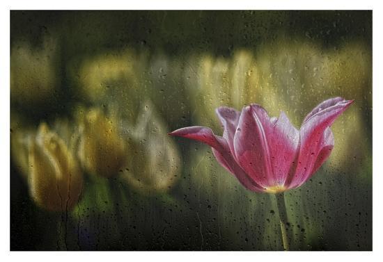 Kiss Of The Rain-Ricky Siegers-Giclee Print