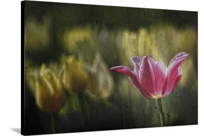 Kiss Of The Rain-Ricky Siegers-Stretched Canvas Print