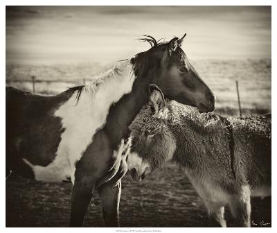 Kissing Horses II-David Drost-Giclee Print