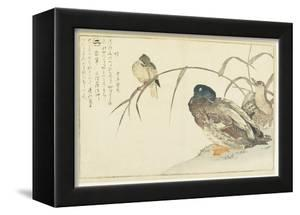 Mallards and a Kingfisher, 1790 by Kitagawa Utamaro