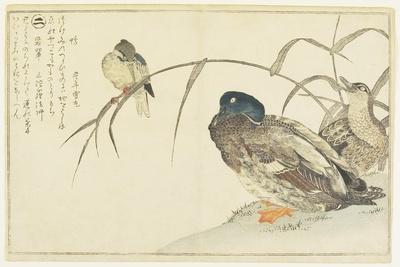 Mallards and a Kingfisher, 1790