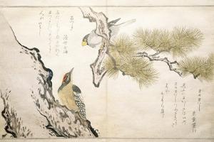 P.332-1946 Vol.1 F.3 Hawfinch and a Woodpecker, from an Album 'Birds Compared in Humorous Songs',… by Kitagawa Utamaro