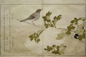 P.332-1946 Vol.2 F.2 Manchurian Great Tit and a Robin, from an Album 'Birds Compared in Humorous… by Kitagawa Utamaro