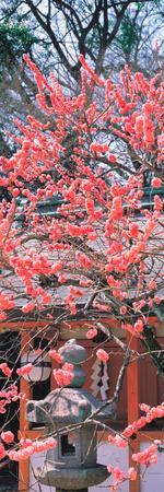 Kitano-Tenmangu Kyoto Japan--Premium Photographic Print