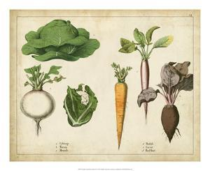 Kitchen Vegetables & Roots I