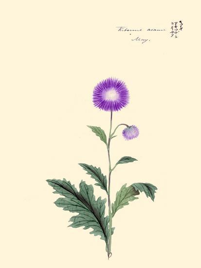 Kitsune Azami-May-Megata Morikaga-Art Print