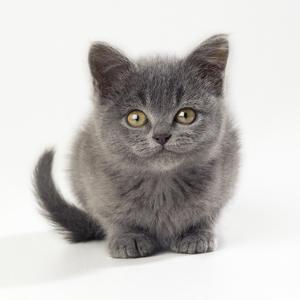 Kitten 11 Weeks Old
