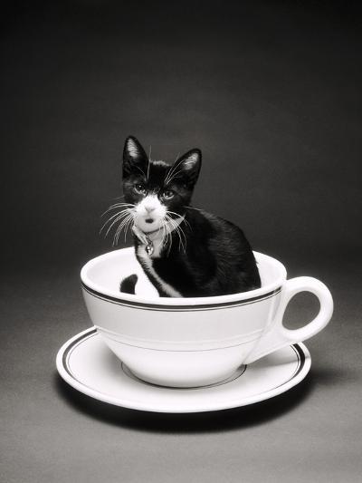 Kitten in a Teacup-Robert Essel-Photographic Print