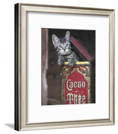 Kitten in Box-Hubert-Framed Art Print