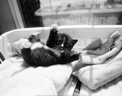 https://imgc.artprintimages.com/img/print/kitten-laundry_u-l-f5h7gx0.jpg?p=0