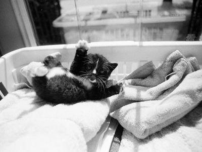 https://imgc.artprintimages.com/img/print/kitten-laundry_u-l-q1b96a70.jpg?p=0