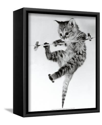 Kitten on a Clothes Line-Erik Parbst-Framed Canvas Print